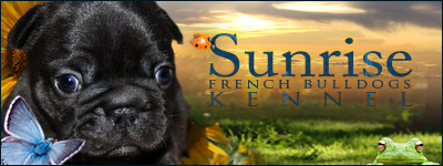 Sunrisefold - French Bulldogs kennel from Florida, USA